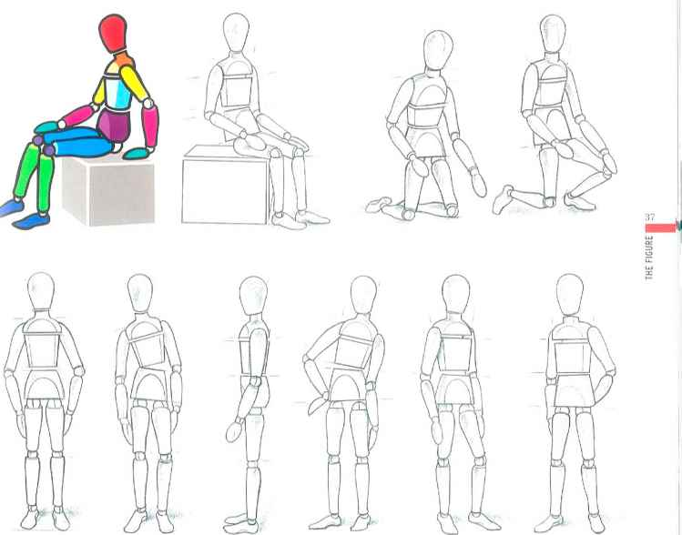 Body Proportions Pose Variations Male