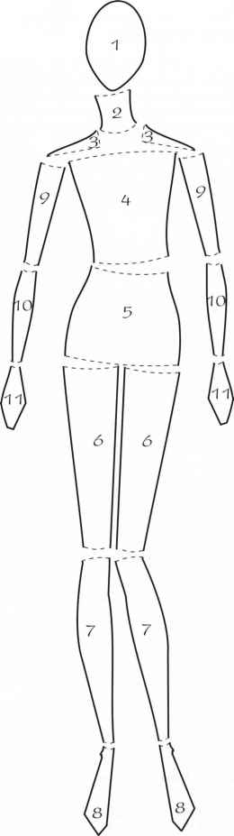Eleven Body Parts - Figure Illustration